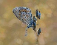 azulita-rocioweb.jpg
